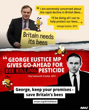 George keep your promises - save Britain's bees avaaz.org/britishbees | Falmouth Packet ad